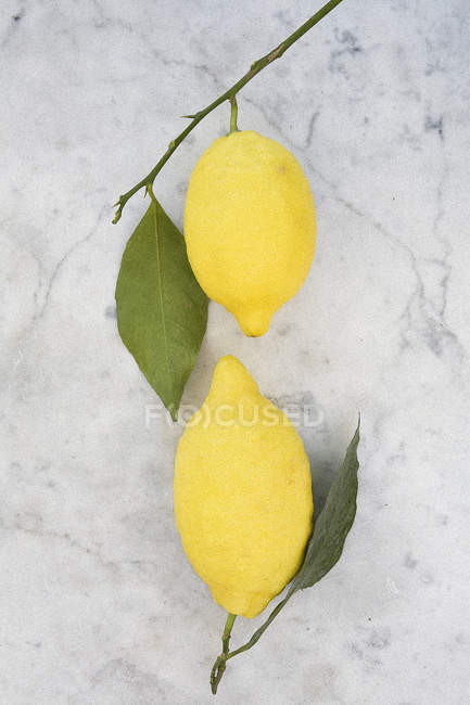 Two lemons on branches — Stock Photo