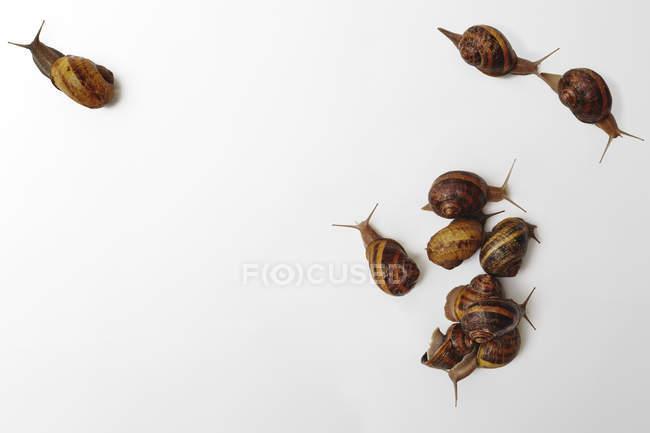 Schnecken auf weißem Hintergrund — Stockfoto