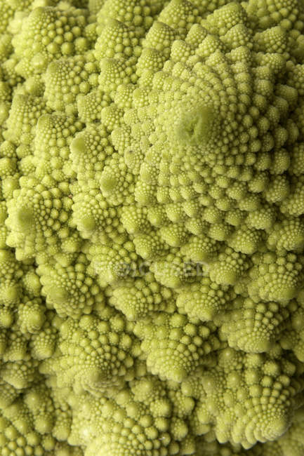 Green romanesco cauliflower — Stock Photo
