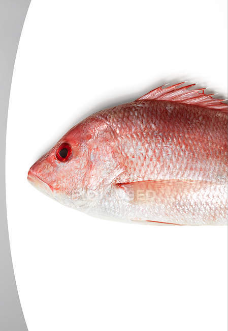 Red fish on white — Stock Photo