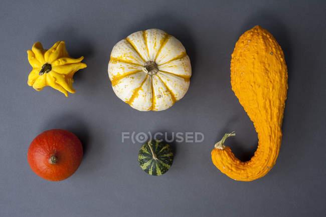 Various squash on gray — Stock Photo