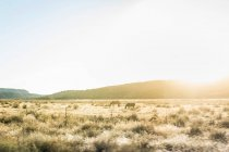 Pferde grasen auf sonnenbeschienenen Landschaft — Stockfoto