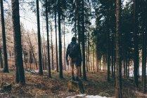 Чоловічий мандрівного, стоячи на ліс пень — стокове фото