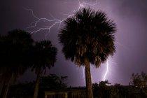 Blitz schlägt hinter Palmen ein — Stockfoto