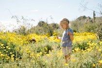Дівчина в лузі польові квіти — стокове фото