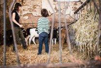 Жіночий фермер і хлопчик дивлячись на телят — стокове фото