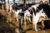 Landwirt nehmen Temperatur von Kuh — Stockfoto