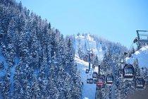 Кабельное автомобили поднимаются над лесом снег — стоковое фото
