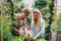 Man and woman tending to plants — Stock Photo