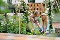 Мужчина и женщина ухаживают за растениями, растущими в банках — стоковое фото