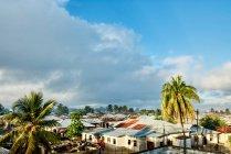 Palmiers et sur les toits — Photo de stock