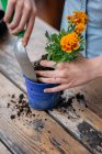 Donna impianto di potting — Foto stock