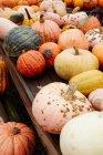 Zucche di autunno colorate — Foto stock