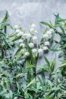 Lirio de flores del valle - foto de stock