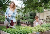 Man and woman tending to plants in wooden troughs — Stock Photo