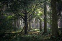 Wald, Beacon Edge, Penrith — Stockfoto