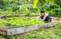 Young woman at allotment — Stock Photo