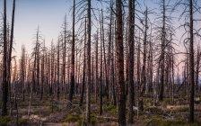 Лес в Национальный парк Брайс-Каньон — стоковое фото