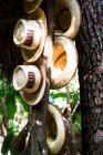 Chapéus pendurados no tronco de árvore — Fotografia de Stock