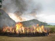 Brennendes Zuckerrohrfeld mit Hügeln im Hintergrund — Stockfoto