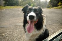 Собачье лицо — стоковое фото