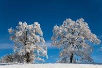 Білий матовий дерев у зимовий пейзаж — стокове фото