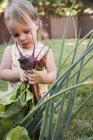 Молодая девушка в саду, держит свежие овощи — стоковое фото