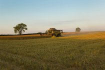 Crop field and combine harvester — Stock Photo