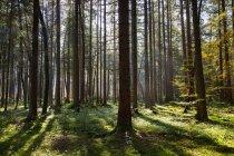 Сонце крізь голі дерева — стокове фото