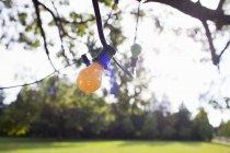 Luzes decorativas, pendurado em um galho de árvore — Fotografia de Stock