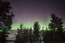 Silhouettes of pine trees with aurora borealis illuminated sky — Stock Photo