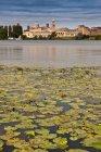 Латаття в ще озеро — стокове фото