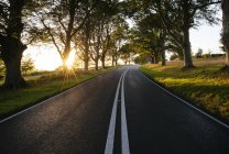 Route rurale bordée d'arbres éclairés par le soleil — Photo de stock