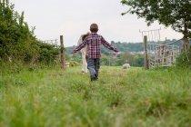 Vista posteriore della mucca da pastore ragazzo nel campo — Foto stock