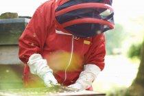 Пчеловод смотрит в улей — стоковое фото