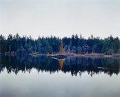 Новорічна ялинка в озеро в сосновому лісі — стокове фото
