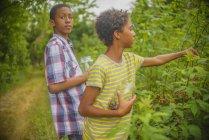 Boys picking berries in garden — Stock Photo