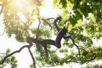 Dettaglio di retroilluminato di angolo basso dell'albero di quercia — Foto stock