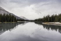 Сосновими деревами та хмарно неба, що відбиваються у воді озера — стокове фото