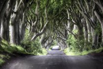 Beech tree lined road — Stock Photo