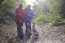 Young couple and their three obedient whippets in woods — Stock Photo
