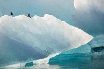 Gabbiani aringa su iceberg alla luce del sole — Foto stock