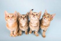 Quattro gatti che osserva in su — Foto stock