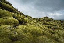 Musgo crescendo na colina — Fotografia de Stock