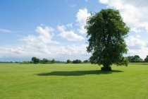 Árboles y campos verdes - foto de stock