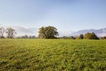 Paysage avec vue lointaine de Murnauer Moos — Photo de stock