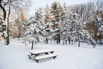 Snowcapped trees, table and bench in winter park — Stock Photo