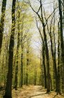 Forest path in spring — Stock Photo