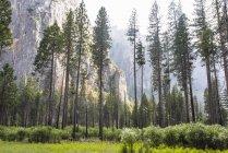 Vista de bosque y montaña - foto de stock