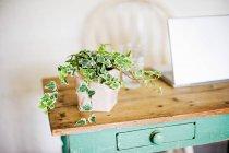 Edera che cresce dal vaso sulla tavola di legno — Foto stock